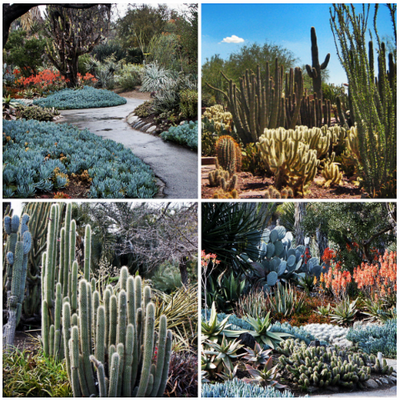Landscape Maintenance In Palm Desert Landscaping In Palm